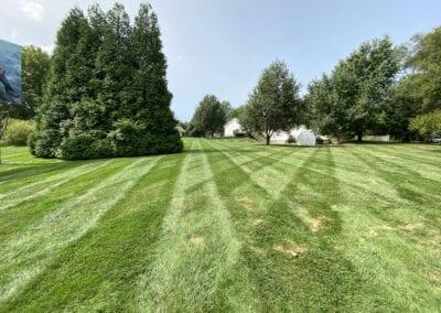 A beautiful lawn
